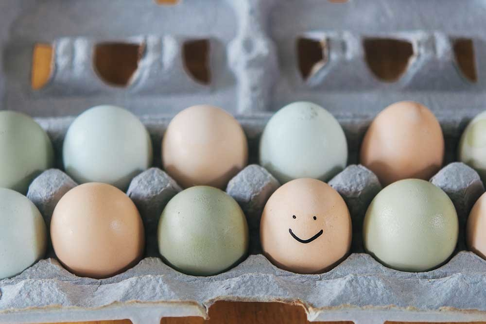 Yolks vs. Whites: The Truth About Eggs