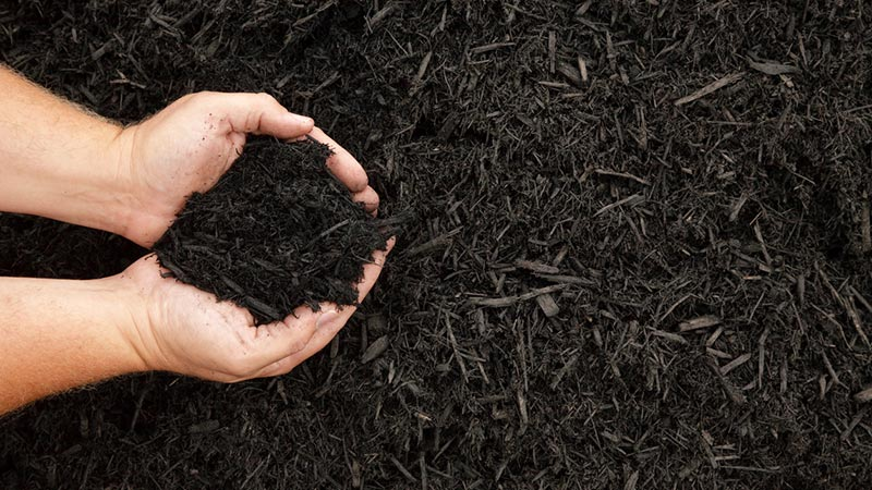 Mulch is your garden's best friend.