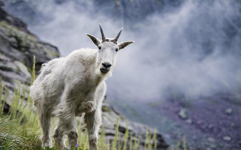 3 Awe-Inspiring Montana Road Trips