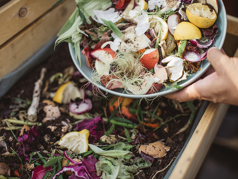 photo of food compost